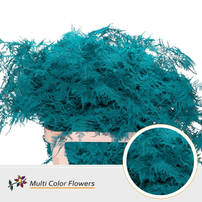 <h4>Asparagus lang Turquoise</h4>