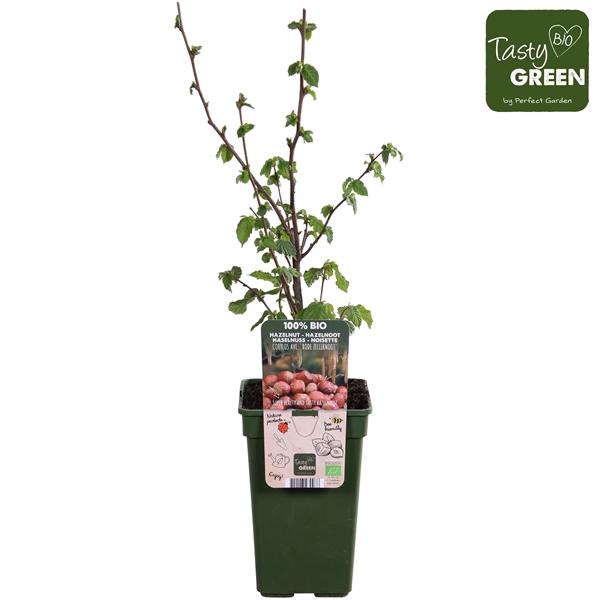 <h4>Corylus Rode Zellernoot - Tasty Green biologisch</h4>