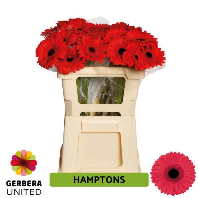 <h4>GE GR Hamptons water</h4>
