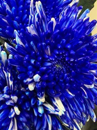 <h4>Chr G Topspin Blue</h4>