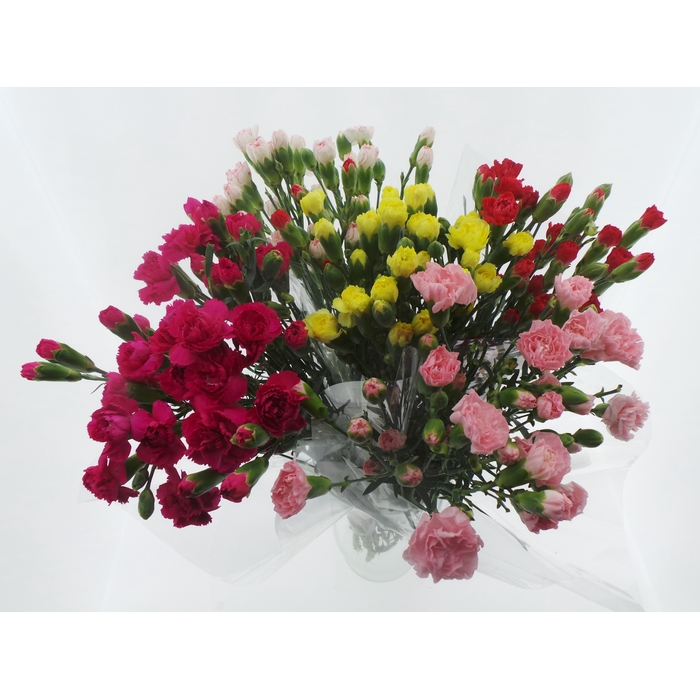 <h4>Bouquet Mono Tros Anjer x10  mix 50cm</h4>