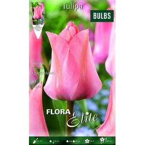 Z Tulipa Fosteriana Queenstown
