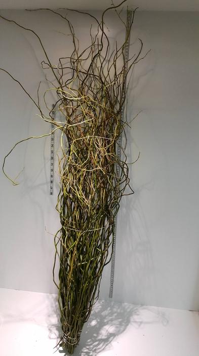 <h4>Greens - Salix</h4>