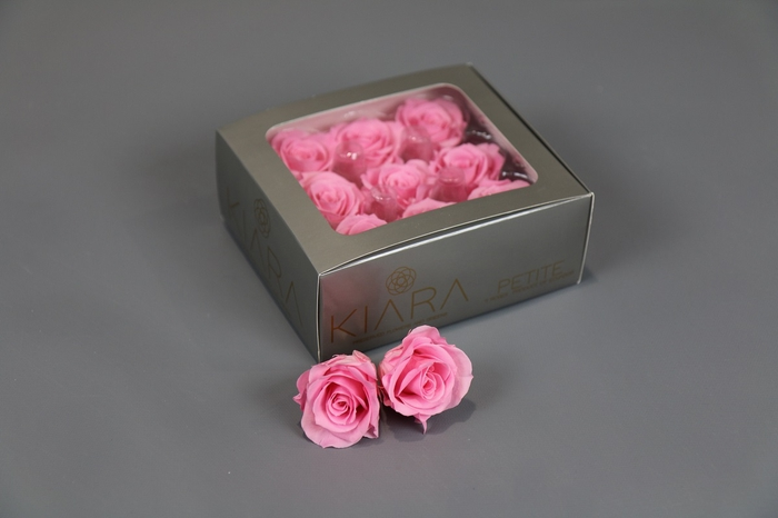 <h4>Rosa Preserved Baby Pink Petite</h4>