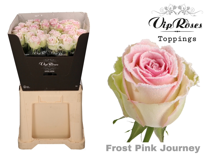 R GR FROST PINK JOURNEY