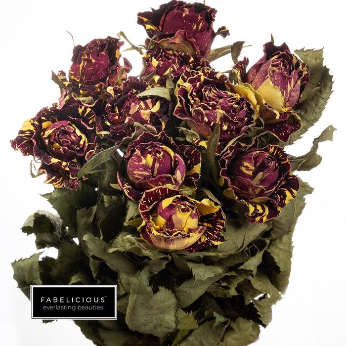 <h4>Dried Rosa grootbloemig Abra Kadabra</h4>