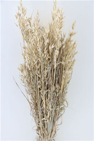 <h4>DRIED AVENA FROSTED WHITE PB</h4>