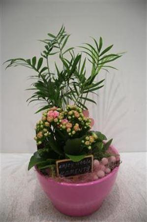 <h4>3612 Ker Drk.pink Cham!!</h4>