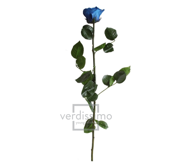 <h4>Roos op steel Standard 55cm D.blauw</h4>