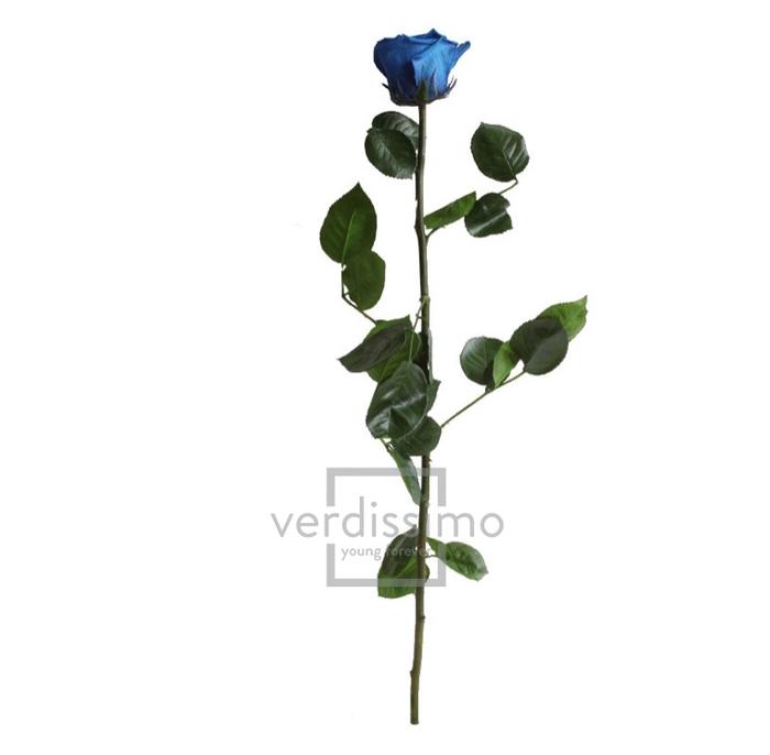 Roos op steel Standard 55cm D.blauw