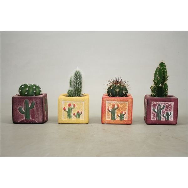 <h4>Cactus gemengd In vierkante decorpot</h4>