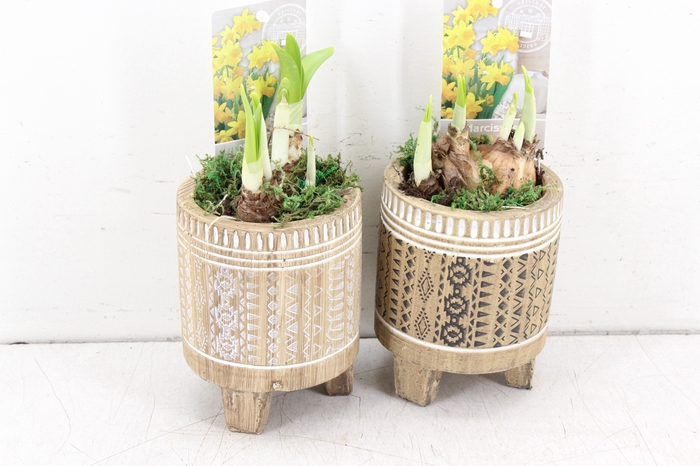 <h4>arr.. Narcis ST1908 - African woodst. pootjes</h4>