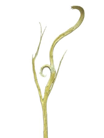 <h4>Flat twig yellow gold 113cm</h4>