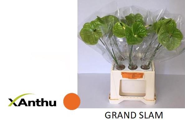 <h4>ANTH A GRAND SLAM</h4>