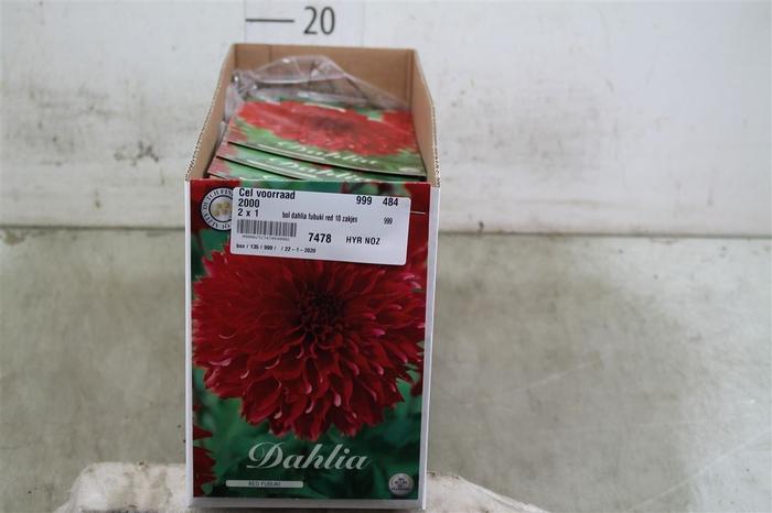 <h4>Bol Dahlia Fubuki Red 10 Zakjes X1</h4>