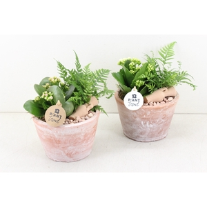 arr. PL - Terra cotta pot - roze/wit
