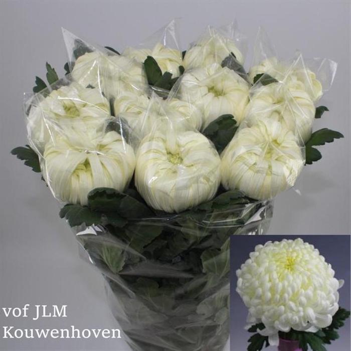 <h4>CHR G VIENNA WHITE</h4>