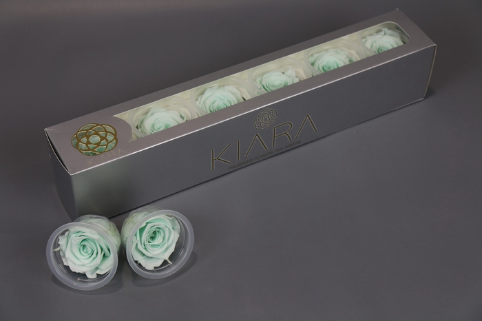 <h4>Rosa Preserved Minty Green</h4>