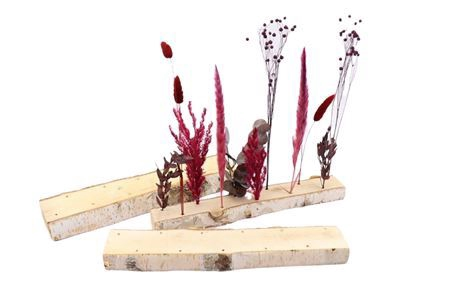 <h4>Base Birch 11 Dried Flowers W7-11 L40.0h3.5</h4>