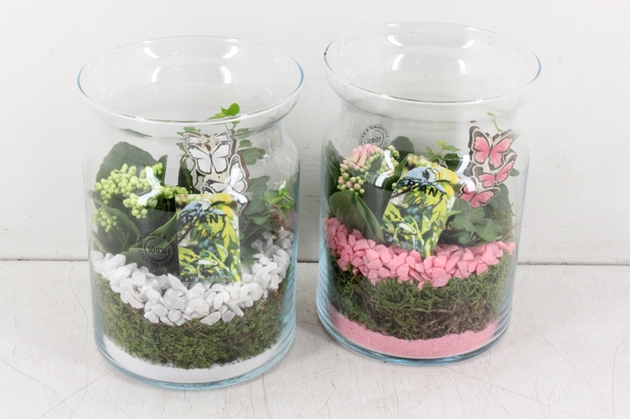 <h4>arr. PL - Glas bose L - roze/wit</h4>