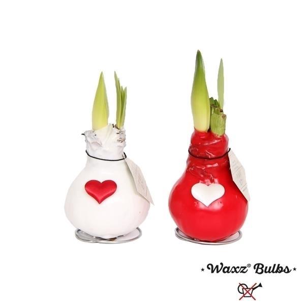 <h4>Waxz® Bulbs Valentijn met hartje</h4>