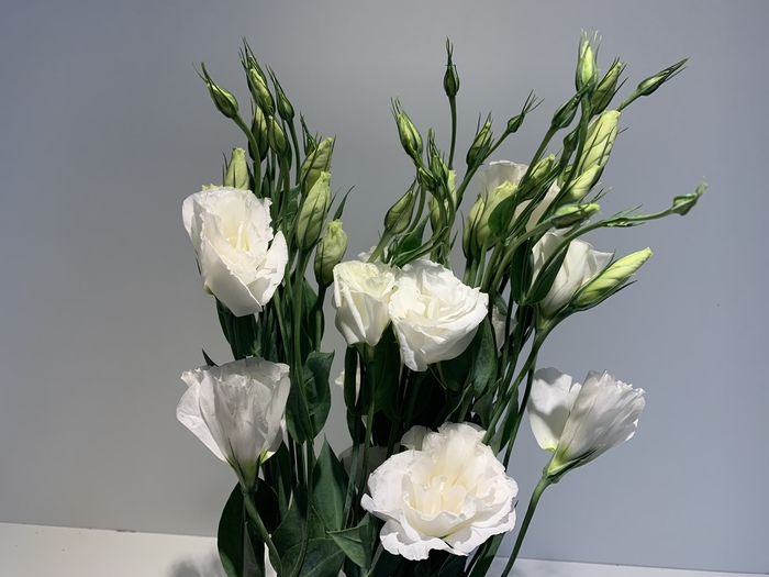 <h4>Lisianthus White (Farm Fresh) p/bunch)</h4>