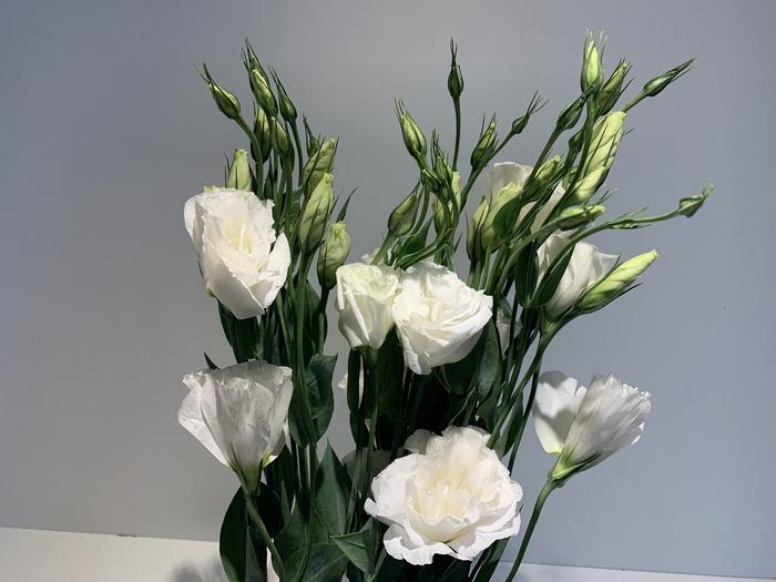 <h4>Eustoma (Lisianthus) White (per bnch)</h4>