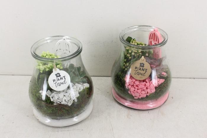<h4>arr. PL - Glas druppel kl. - roze/wit</h4>