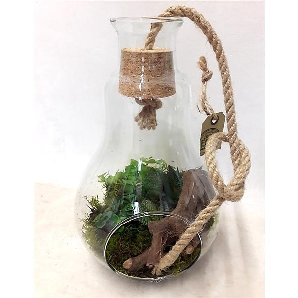 <h4>912 Terrarium glas+Kurk+Touw Succulentmix</h4>