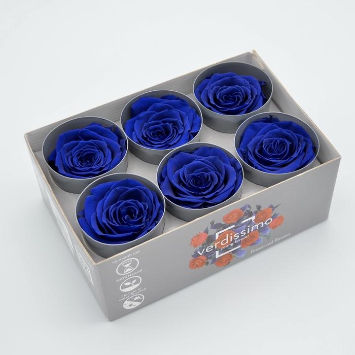 <h4>R PR M Dark Blue</h4>