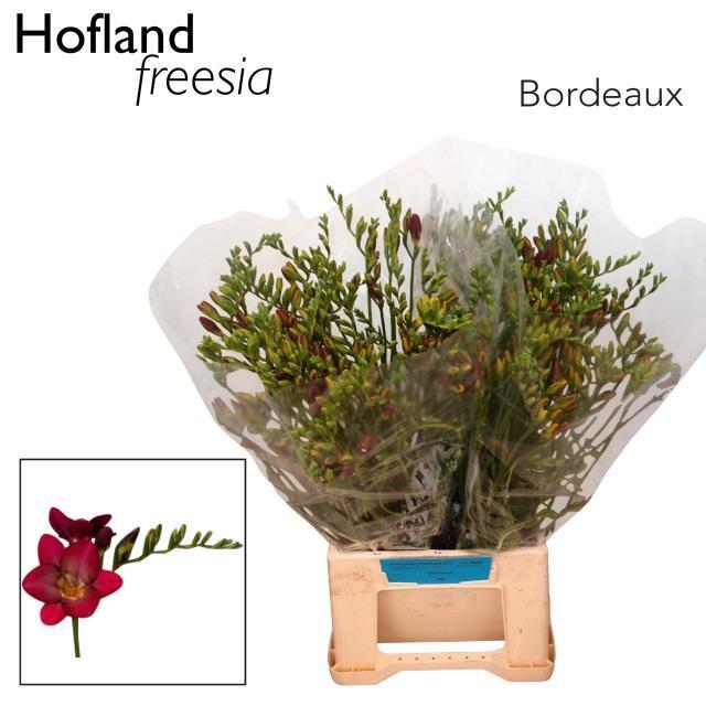 <h4>FR EN BORDEAUX ART</h4>