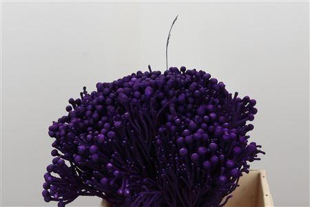 <h4>Kaaps Brunia Silver Dark Lilac</h4>