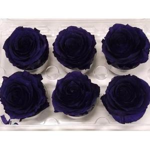 R Prs Violet