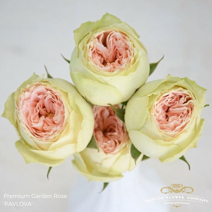 <h4>Rosa Garden Pavlova Spray</h4>