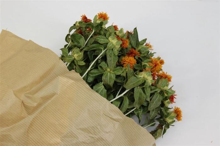 <h4>Dried Carthamus Orange</h4>
