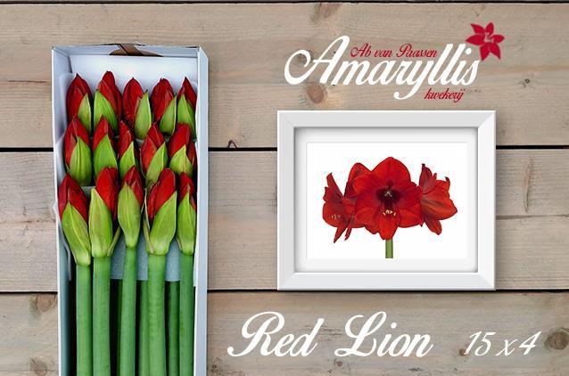 <h4>HIPP GA RED LION</h4>