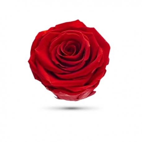 <h4>Rosa preservada cabeza roja</h4>
