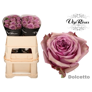 R GR DOLCETTO!