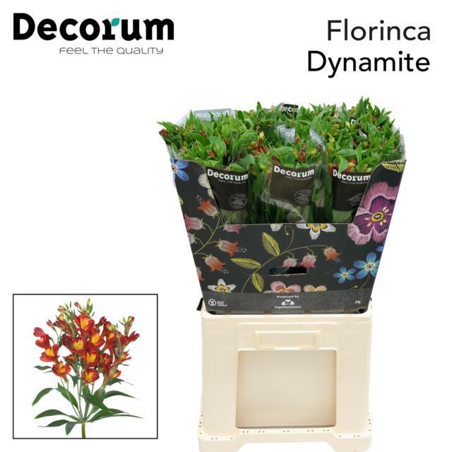 <h4>Flor Dynamite</h4>