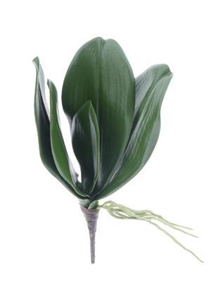 <h4>Af Phalaenopsis Leaves 24cm</h4>