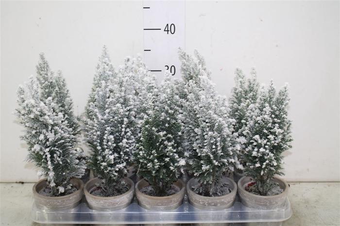 <h4>Kerstb Versierd Snow In Keramiek Pot Deco</h4>