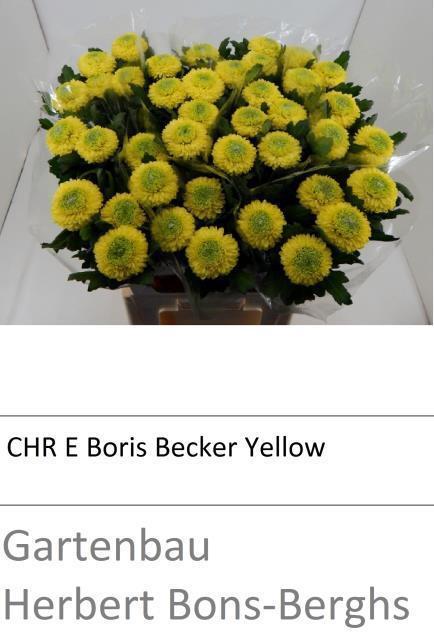 <h4>CHR E YELLOW BORIS B</h4>