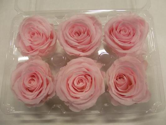 <h4>R Prs Light Pink</h4>