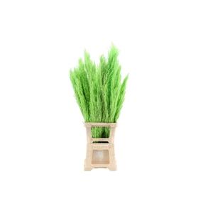 Pres Plumero Silvestre Apple Green (5 Stems Bunch)