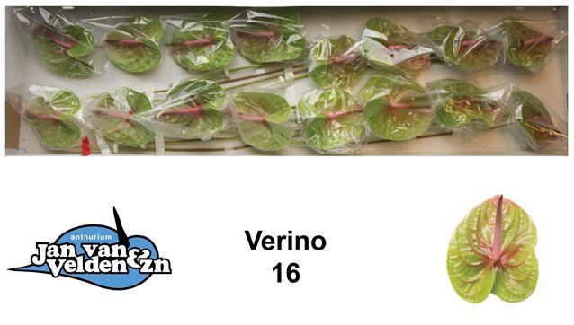 <h4>Anth Verino</h4>