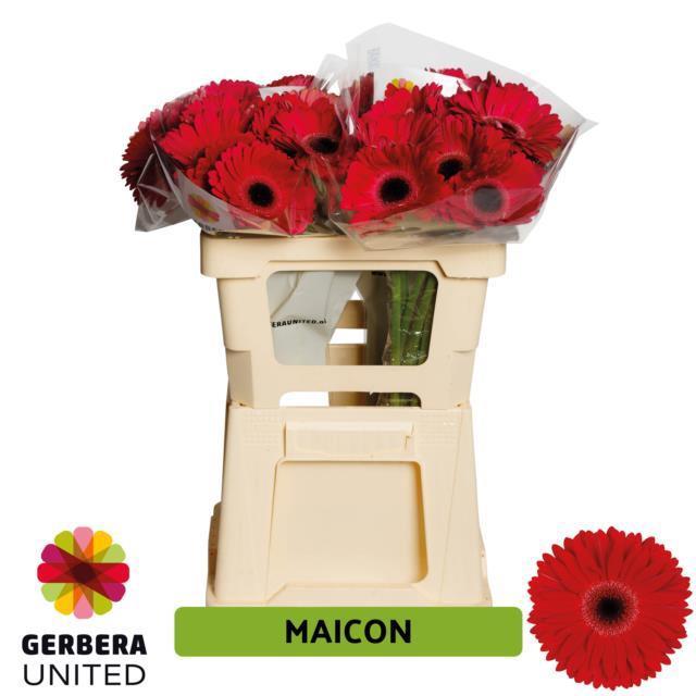 <h4>GE GR Maicon water</h4>