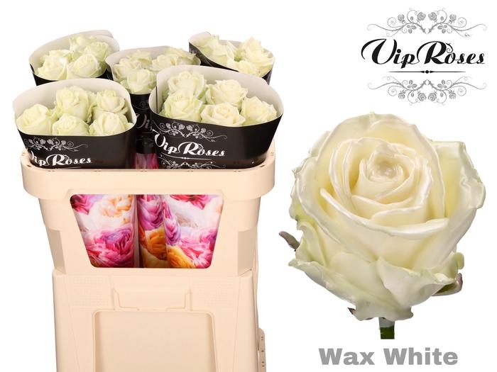 <h4>R GR WAX WHITE x 25</h4>