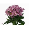 Chrysanthemum spray Stylist Pink