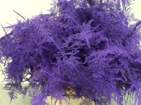 <h4>Asp. Extra Purple</h4>