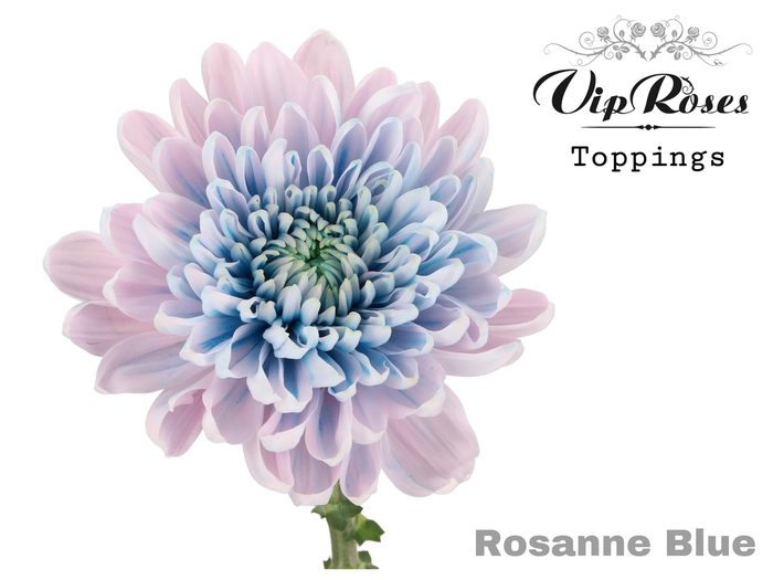<h4>CHR G ROSANNE BLUE</h4>